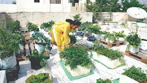 Uses Of Kitchen Garden Farm Produce Under Single Roof The Peninsula Qatar