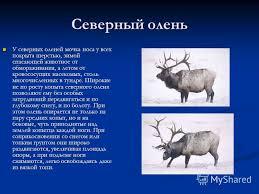 Презентация на тему Тема Приспособленности живых организмов к  4 Северный