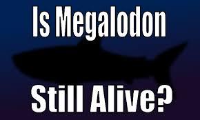 megalodon shark sightings 2015. Modren Megalodon For Megalodon Shark Sightings 2015 C