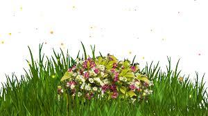 Resultado de imagem para fotos de flores em movimentos