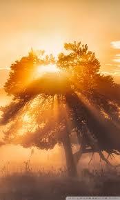 morning sun ultra hd desktop background