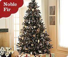 bethlehem lighting christmas trees. Bethlehem Lights Ready Shape Noble Fir Tree With Instant Power Lighting Christmas Trees 5