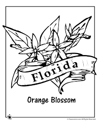 Small Picture State Flower Coloring Pages Florida State Flower Coloring Page