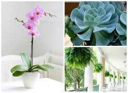 low maintenance air purifying pet safe houseplants you need in your home