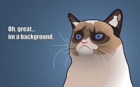 Funny Cat Wallpaper Free Gallery