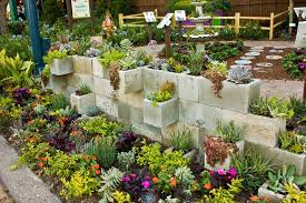 succulent garden design ideas saving the forest and environment