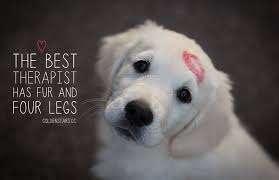 Quotes About Dogs Custom 48 Inspirational Dog Quotes About Life And Love PlayBarkRun