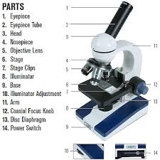 Parts Of The Microscope Different Types Of Microscope Best Microscope For College Students
