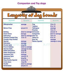 All Dog Breeds Chart Longevity Of Dog Breeds Do All Breeds Have The Same Lifespan
