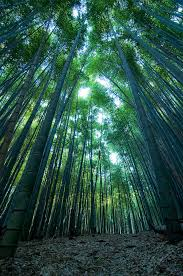 Vertical Bamboo Forest Photograph By Aaron Bedell