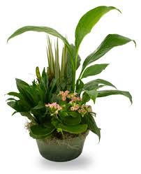 send a plant today
