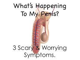 testicular rupture symptoms. worrying penis symptoms and what to do about them. testicular rupture