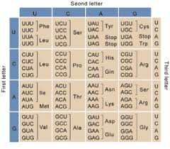 The Genetic Code Types And Codons For Amino Acids Translation