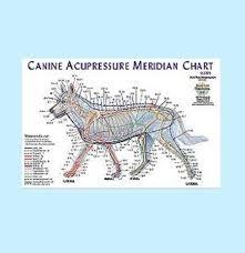 Animal Meridian Chart For Acupressure Canine J 1125c