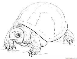 Small Picture How to draw an Ornate Box Turtle Step by step Drawing tutorials