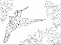 Small Picture Impressive adult hummingbird coloring pages printable with