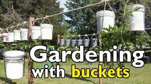 bucket gardening. Gardening With 5 Gallon Buckets Bucket