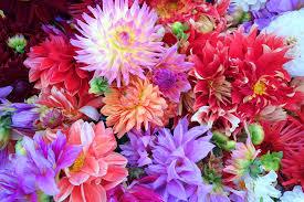 「ピンクの花画像 無料」の画像検索結果
