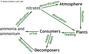 Nutrient Cycles Recycling In Ecosystems The Carbon And