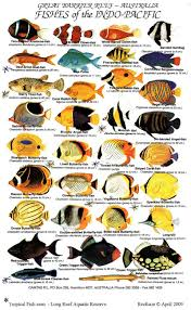 Australian Reef Fish Species Chart Tropical Fish Reefcare Long Reef