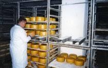 Отчет по Производственной Практике Магнит Отчеты по практике на  Отчет по Производственной Практике Магнит