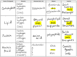 Monomer And Polymer Chart Carbon Based Molecules Biology Resource