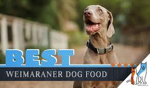 6 Best Weimaraner Dog Foods Plus Top Brands For Puppies And