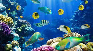 Fish Desktop Wallpapers - Top Free Fish ...