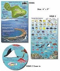 Maui Hawaii Reef Fish And Creature Guide