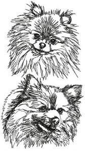 325 Beste Afbeeldingen Van I Pomeranians In 2018 Schattige