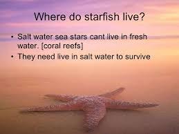 star fish 4 where do starfish