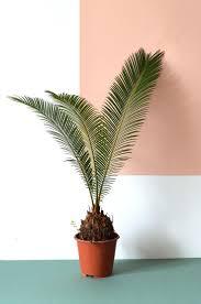 urban jungle bloggers. Indoor Floor PlantsIndoor ...
