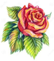 Small Picture Drawn rose simple realism Pencil and in color drawn rose simple