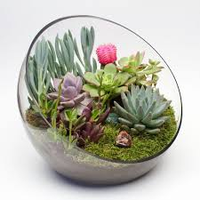 diy terrarium kit for succulents cacti other air plants sponsored
