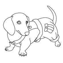 Small Picture Bulldog coloring pages Hellokidscom