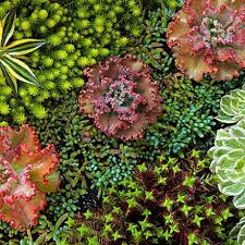 Small Picture Best Of Tips Outdoor Succulent Garden Design Awesome