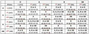 Blood Type Offspring Chart Blood Type Heredity Biology Dictionary