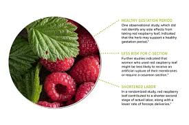 is raspberry leaf safe during pregnancy