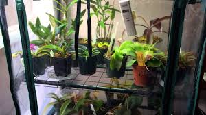 how to make a diy indoor grow chamber for warm growing orchids and lowland carnivorous plants