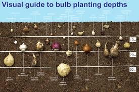 Guide To Planting Depths Of Bulbs Van Meuwen