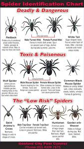 Dangerous Spider Chart For Australia Spider
