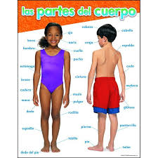 Human Body Parts Chart In English Chart Lists Parts Of The Body From Head To Toe In Spanish