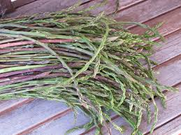 Image result for wild asparagus