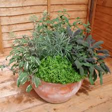 how to grow a herb garden. You Can Grow Herbs Outside In A Dedicated Herb Garden, Raised Bed, Vegetable Plot Or Even Amongst The Flowers Your Borders! How To Garden S