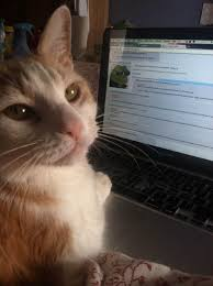 on the internet nobody knows you re a cat. Modren The True Throughout On The Internet Nobody Knows You Re A Cat