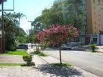 imagem de Boa Vista do Sul Rio Grande do Sul n-14
