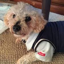 浜松 市 保護 犬