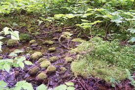 Nature Wikipédia