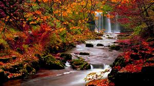fall nature backgrounds. Download Fall Nature Backgrounds D