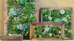 make your own diy vertical succulent